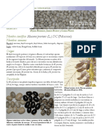 mucuna.pdf