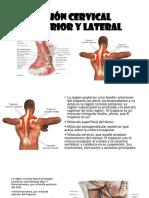 Región Cervical Posterior y Lateral