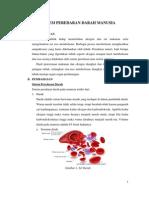 Sistem Peredaran Darah Manusia2