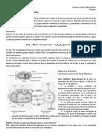 Fotosíntesis y respiración celular.docx
