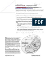 Vision General de La Respiracion Celular 160213110844