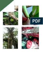 contoh kayu.docx
