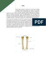 torsion tibial