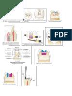 dentistry2013
