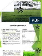 Graminea Angleton