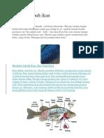 Tugas Struktur Ikan Dhifa