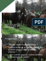 caballos.pptx