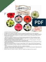 COMO PLANTAR LOS AMARYLLIS.docx