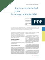 5-15_respiracion_y_circulacion_fetal-jhonny.pdf