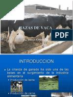 Razas Vacas