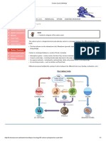 Carbon Cycle _ BioNinja.pdf