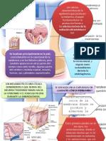 melanocitos.pptx