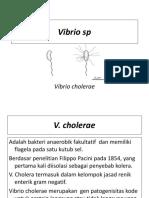VIBRIO  SP 9.pptx