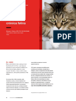 Cr Feline Chronic Enteropathy 43051 Article.en.Es