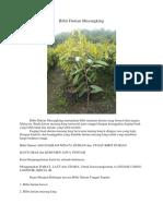 LUAR BIASA..!Hp/Wa 0822-2022-8118, Jual Bibit Durian Musang King, Bibit Durian Musang King Di Bogor,