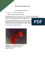 Worksheet Invasive Species