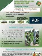 POST COSECHA DE SANDIA}.pptx