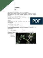 BOERHAVIA A.docx