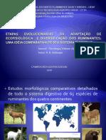 Etapas Evolucionárias da Adaptação de ECOFISIOLÓGICA e Diversificação dos ruminantes