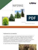 Especies coniferas, latifoliadas.pptx