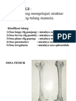 K1- Osteologi