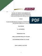 PLAGAS_DE_IMPORTANCIA_DURANTE_LAS_ETAPAS.docx