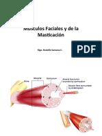 Clase 11 y 12 Miologia de Cabeza y Cuello