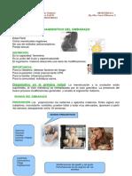 Dx_del_embarazo.pdf