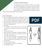 estudo individual da anatomia dos dentes decíduos