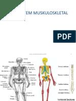 Sistem Muskuloskletal 1