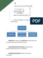 Mutaciones y Operon Lactosa[1]