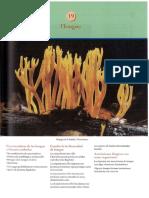 hongos apartado de libro.pdf