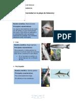 Biodiversidad Del Mar de Salaverry