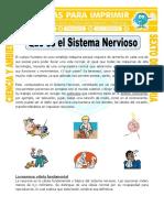 Ficha-Que-es-el-Sistema-Nervioso-para-Sexto-de-Primaria (1).doc