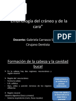 Clase 2 Embriología Del Cráneo y de La Cara