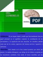 Cerebelo-Tronco
