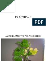 Curso Completo Fitopatologia Practicas