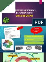 Fijacion Del Co2,Ciclo de Calvin