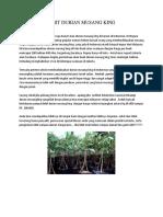 BERKUALITAS..!082-220-228-118, bibit durian duri hitam trubus, bibit durian duri hitam bukalapak
