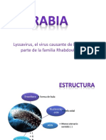 RABIA ppt