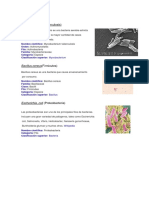 Mycobacterium ESTEFANY