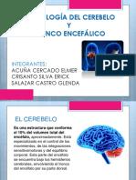 Morfología Del Cerebelo y Tronco Encefálico