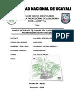informe del Cutivo de palma