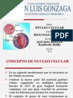 Nucleo Celular
