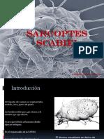 SARCOPTES-SCABIEI