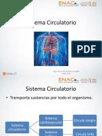 clase 9 sistema circulatorio.pptx
