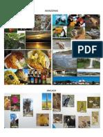 24 Regiones Flora Fauna Etc