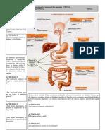 DigestivoH2