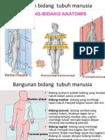 Lab Posisi Bidang Arah Anatomi
