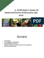 AULA 2018 Desenvolvimento Das Aves